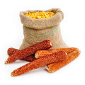 Bag of corn kernels with corn cobs in front - PhotoDune Item for Sale