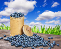 Blueberries in a basket is scattered - PhotoDune Item for Sale