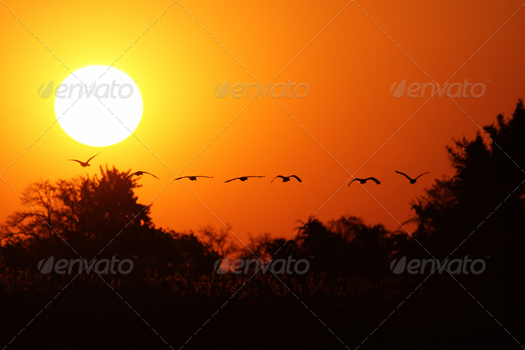 African Sunset - Stock Photo - Images