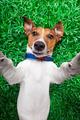 dog selfie - PhotoDune Item for Sale