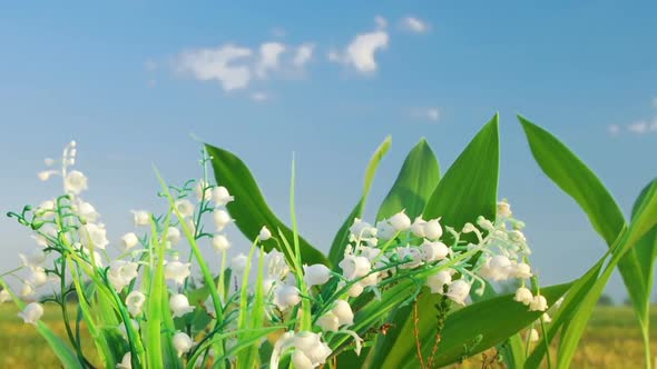 Download Lily Of Valley On Cloud Background nulled download