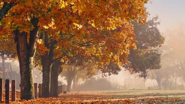 VideoHive Fall Trees With Falling Leaves And Person Walking 18941467