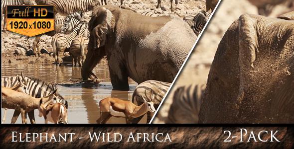Elephant Wild Africa