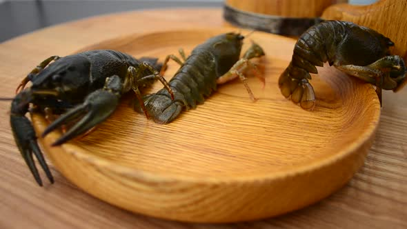 Download Crayfish 4 nulled download
