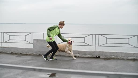 Download Labrador Dog Playing with Favorite Toy During Walk nulled download