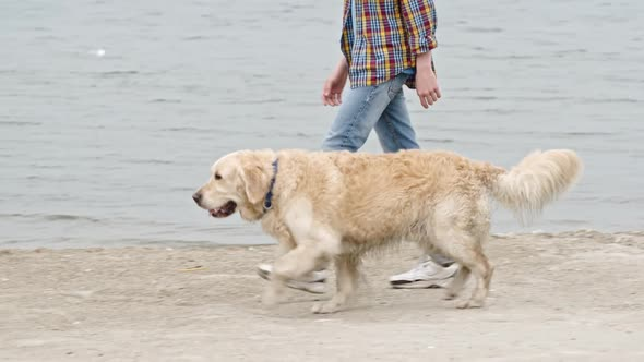 Download Teenage Boy on Coastal Walk with Labrador Dog nulled download