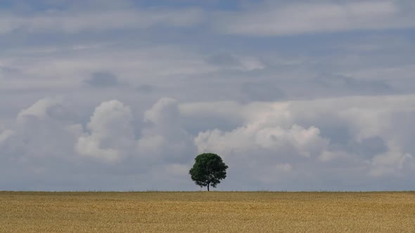 Download Lonely Tree in The Field nulled download