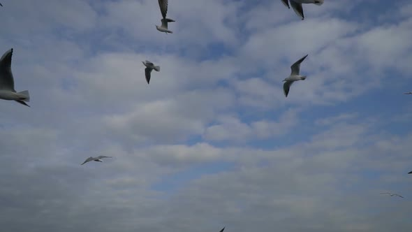 VideoHive Flight Off The Seagulls with Puffy Clouds 18932111