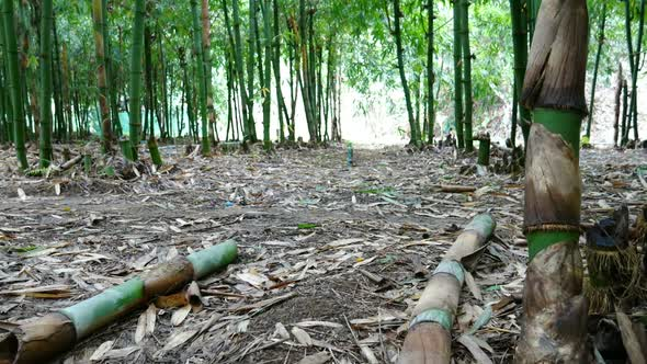 VideoHive Bamboo in the Forest 18701598