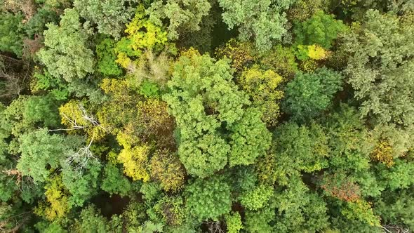 Download Yellow And Green Trees nulled download
