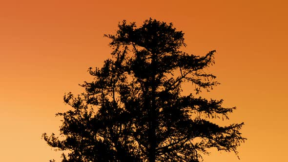 Download Tree Silhouette Against Sunset Sky nulled download