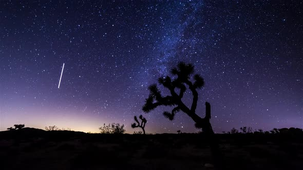 VideoHive Milky Way and Joshua Tree Timelapse 19148648
