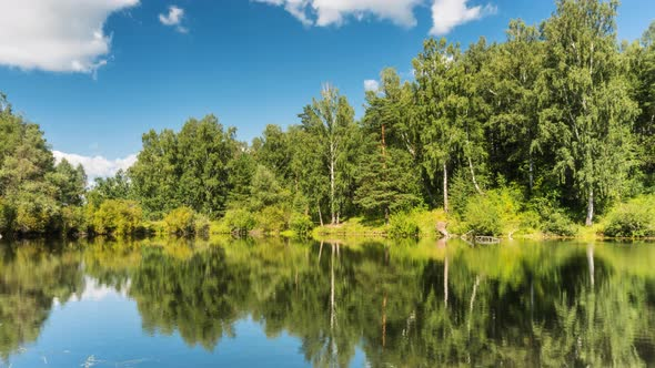 VideoHive Pond with Ducks in the Forest 19151517